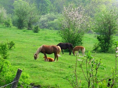 Mare and foal. Horses grazing in field Stock fotó
