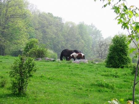 Twee paarden in het veld-stock foto's Stockfoto