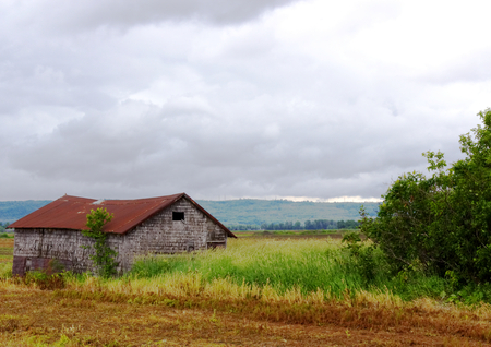 Old abandoned shack in a field on a cloudy day Stock Photo