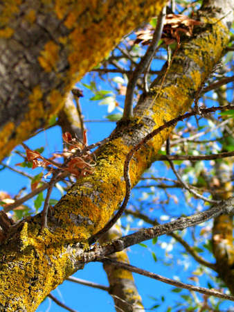 Tree Stock Photo - 706957