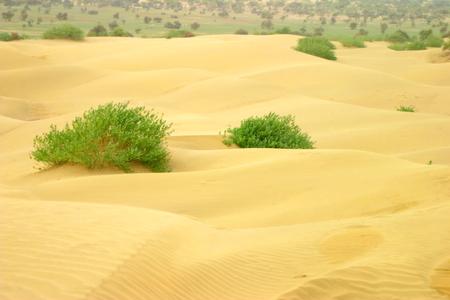 mumtaz: Rajashtan