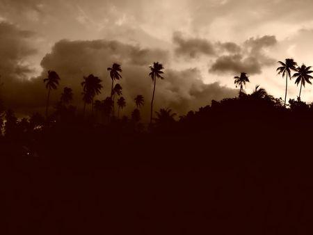 Coconut palms on sand beach in tropic on sunset. Thailand, Koh Chang, Klong Prao beach Stock Photo - 7839004