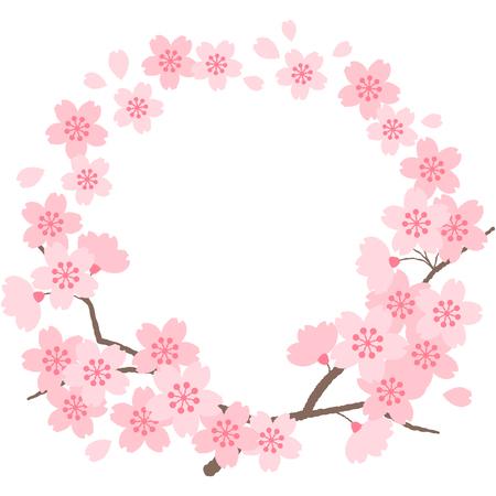 Ccherry blossoms