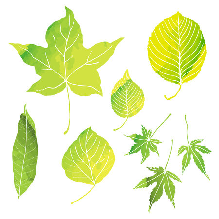 gently: Green leaves illustrations with vector data
