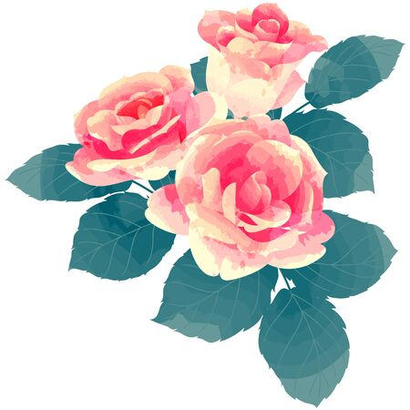 Rose on white background. 写真素材 - 75198600