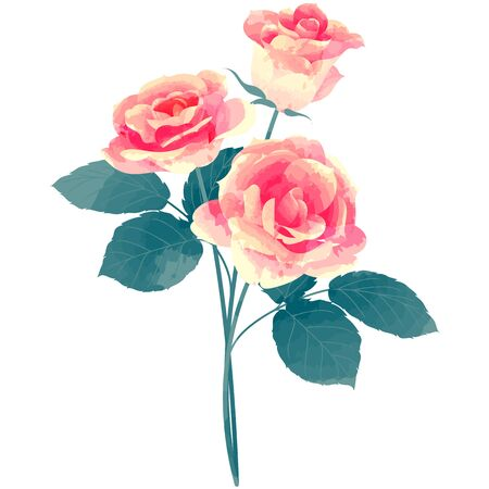 rose-birth flower vector illustration in watercolor paint textures