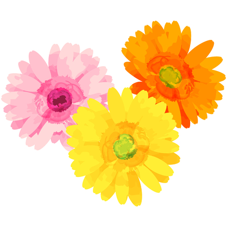 garbera-birth flower vector illustration in watercolor paint textures