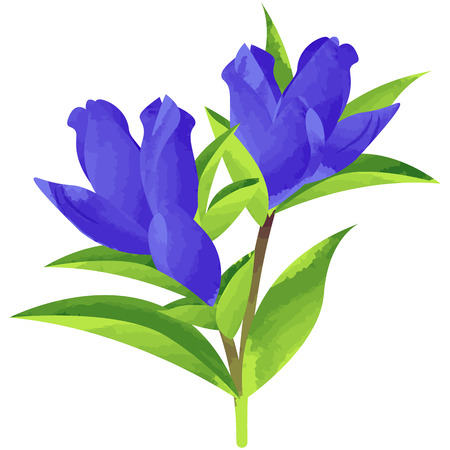 gentian-birth flower vector illustration in watercolor paint textures