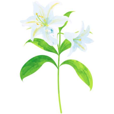 Lily-birth flower vector illustration in watercolor paint textures 写真素材 - 75199696