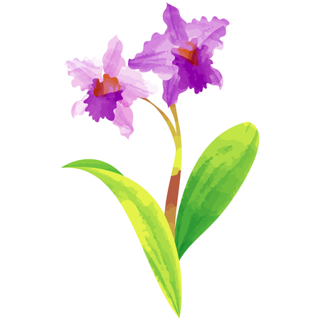 Cattleya-birth flower vector illustration in watercolor paint textures