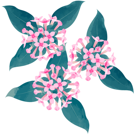 bouvardia-birth flower vector illustration in watercolor paint textures