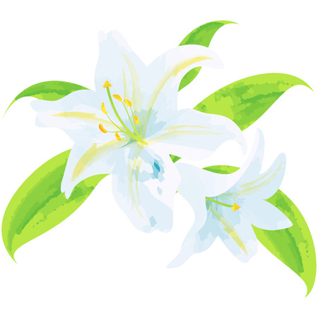 Lily-birth flower vector illustration in watercolor paint textures  イラスト・ベクター素材