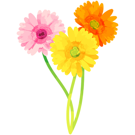 Gerbera-birth flower vector illustration in watercolor paint textures