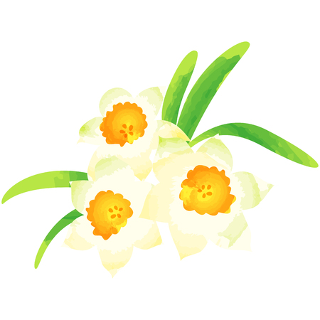 Narcissus-birth flower vector illustration in watercolor paint textures