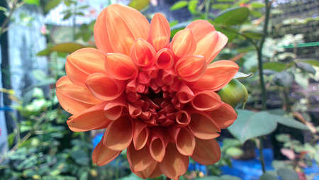 couleur orange:  Orange color flower