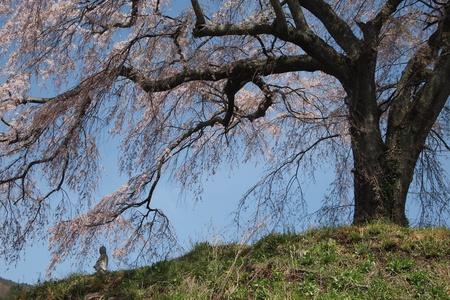 jizo: Cherry blossom jizo Stock Photo