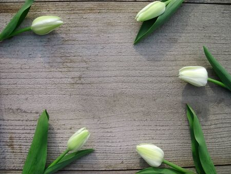Spring background with white tulips on wooden background with space for message. Mothers Day background. Top view. Valentines Day background. Banque d'images - 140640313