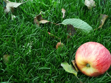 Red apple on grass in the garden. Lawn blur with soft light for background.