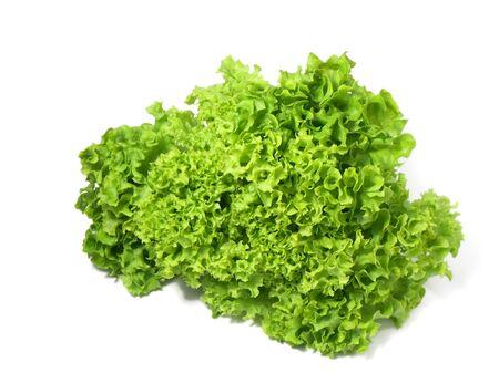 Salad leaf. Green oak lettuce on white background. 写真素材