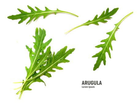 Green fresh leaf rucola or arugula isolated on white background