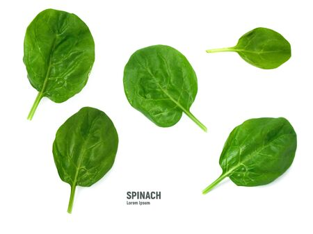 Spinach leaves isolated on white background.