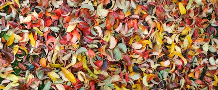 Autumn background. Background of autumn leaves