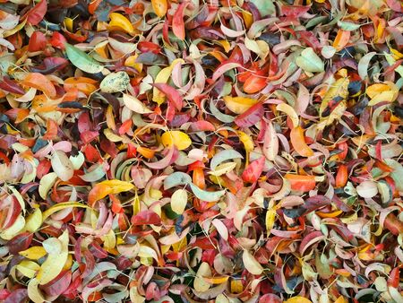 Autumn background. Background of autumn multicolored leaves.