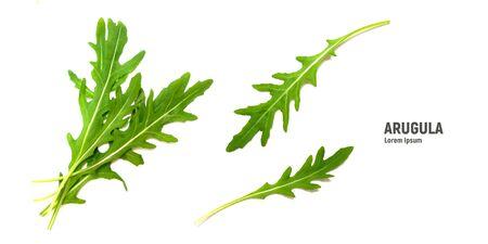 Green fresh leaf rucola or arugula isolated on white background.