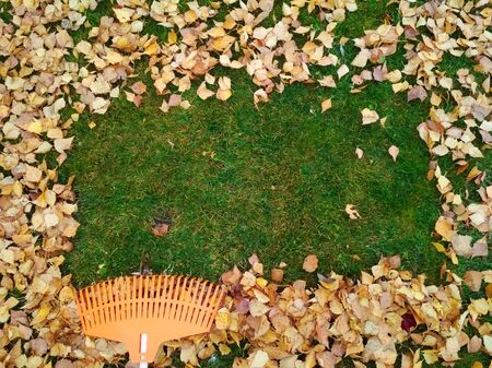 Pile of fall leaves with fan rake on lawn.