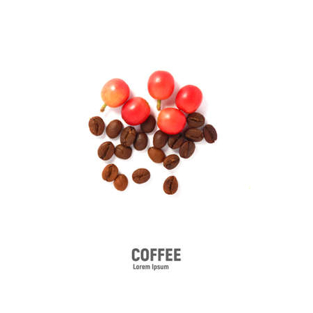 Red coffee beans and the roasted coffee beans isolated on white background.