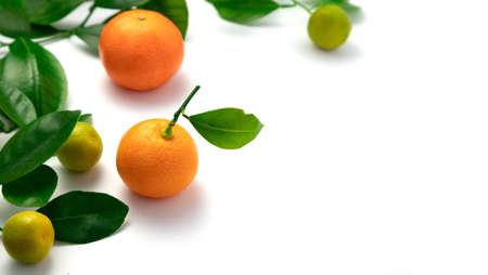 Ripe tangerines with leaves on a white background