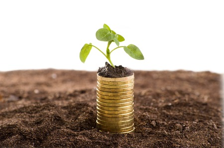 make money: Golden coins in soil with young plant. Money growth concept.