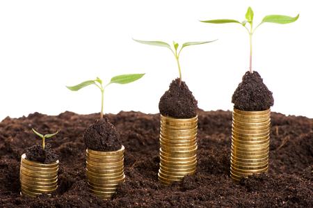 crecimiento planta: Concepto de la inversión. Monedas de oro en el suelo con la planta joven. Concepto del crecimiento de dinero.
