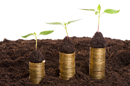 golden coins: Investment concept. Golden coins in soil with young plant. Money growth concept.