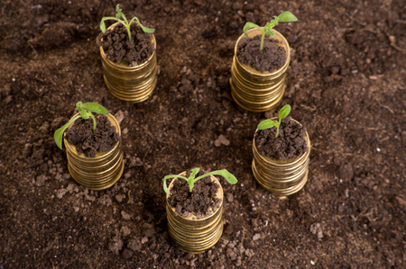 golden coins: Golden coins in soil with young plant. Money growth concept.