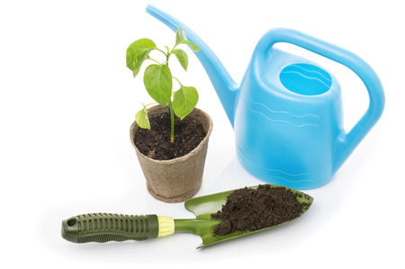 peat pot: Young pepper seedling in a pot with a garden trowel and watering can Stock Photo