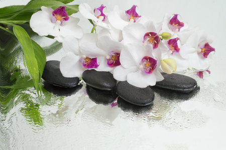 spa Background - orchids black stones and bamboo on water Imagens - 90672943