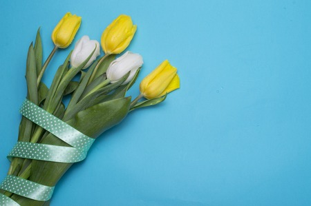 Yellow tulips with yellow ribbon on blue Reklamní fotografie
