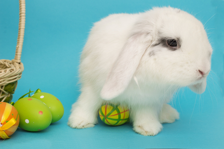 Living Easter bunny with eggs and a basket on a blue background