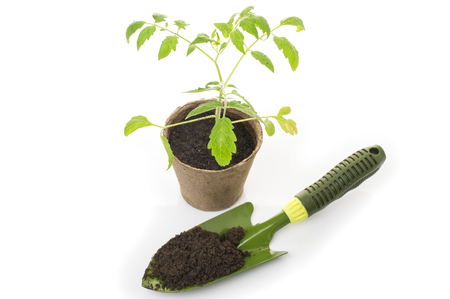Young tomato seedling in a pot with a garden trowel