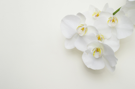 romantic branch of white orchid on beige background. 스톡 콘텐츠