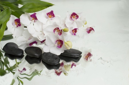 spa Background - white orchids black stones and bamboo on water 스톡 콘텐츠