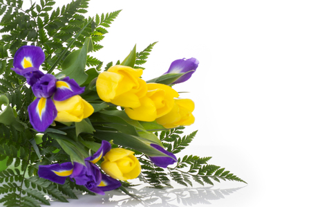 bunch of yellow tulips and blue irises on white background
