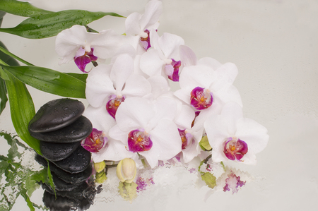 spa Background - orchids black stones and bamboo on water Imagens