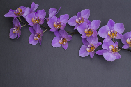 romantic branch of pink orchid on gray background. 스톡 콘텐츠 - 124601797