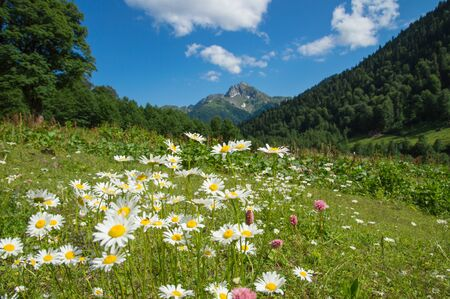 Beautiful view of alpine meadows in the Caucasus mountains Imagens