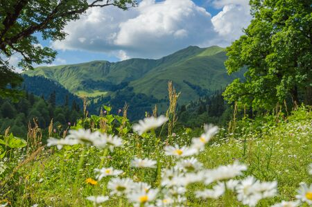 Beautiful view of alpine meadows in the Caucasus mountains 写真素材