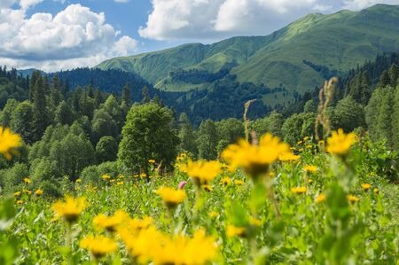 Beautiful view of alpine meadows in the Caucasus mountains Foto de archivo