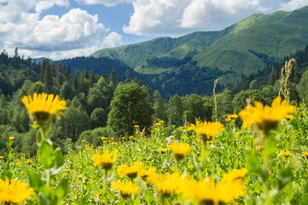 Beautiful view of alpine meadows in the Caucasus mountains 스톡 콘텐츠