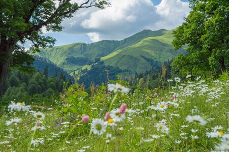 Beautiful view of alpine meadows in the Caucasus mountains. Imagens
